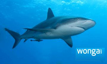 Wonga loan Shark.