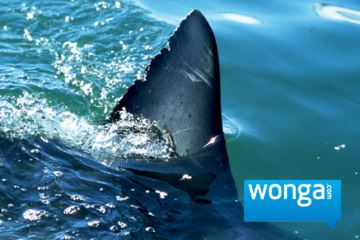 Wonga loan shark.