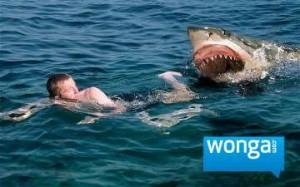 Wonga Shark.