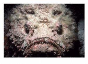 A Stonefish